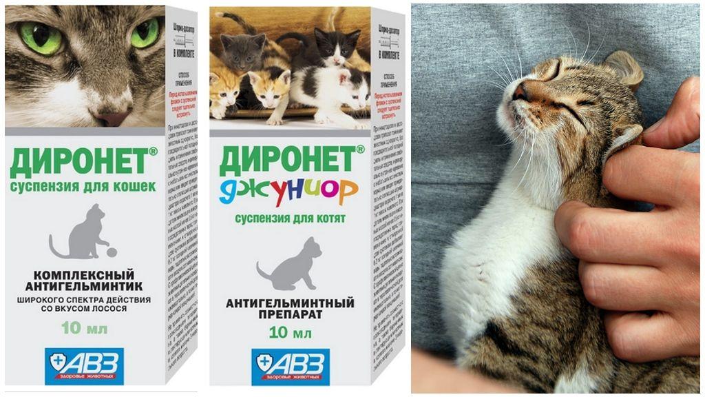 Суспензии Диронет от глистов для кошек