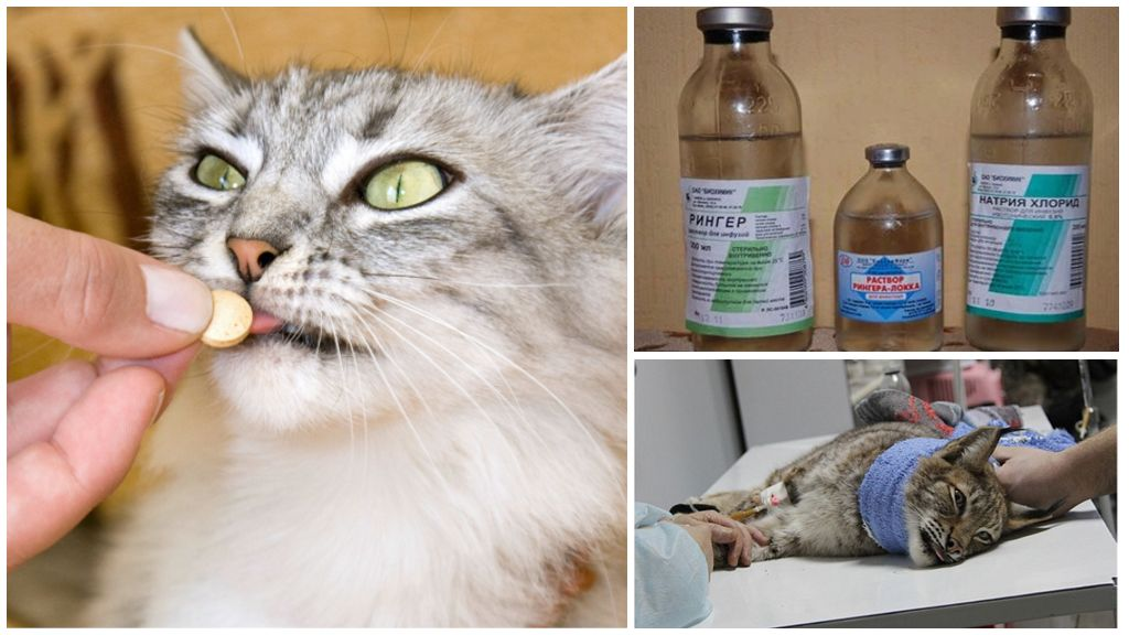 Лечение кошки от глистов