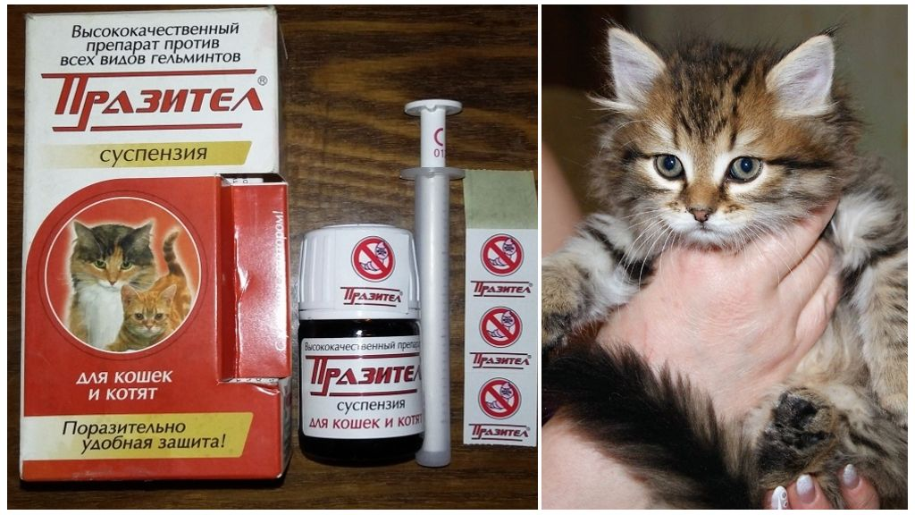 Празител от глистов для котят