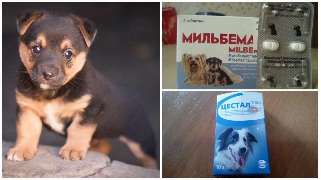 Препараты для лечения щенков от глистов