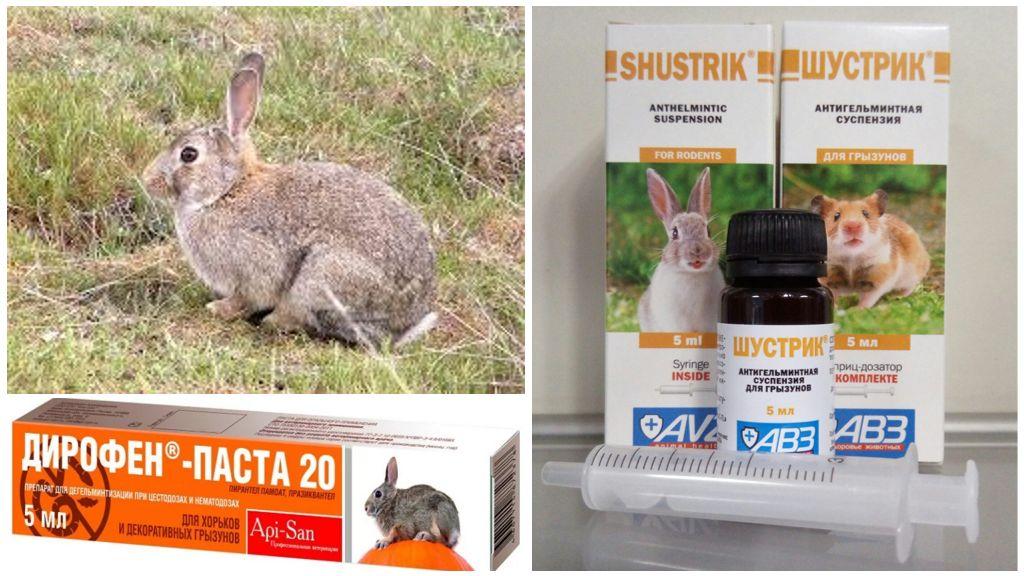 Противогельминтные препараты для кроликов