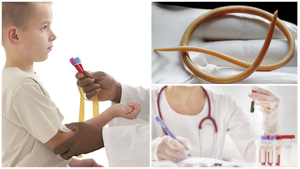 Исследования крови на паразитов у детей