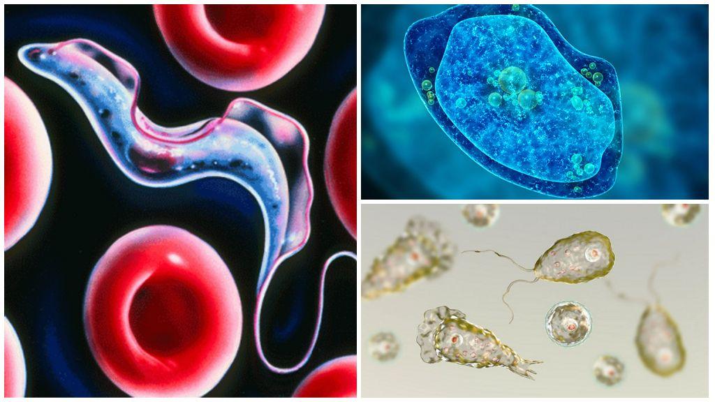 Виды простейших паразитов