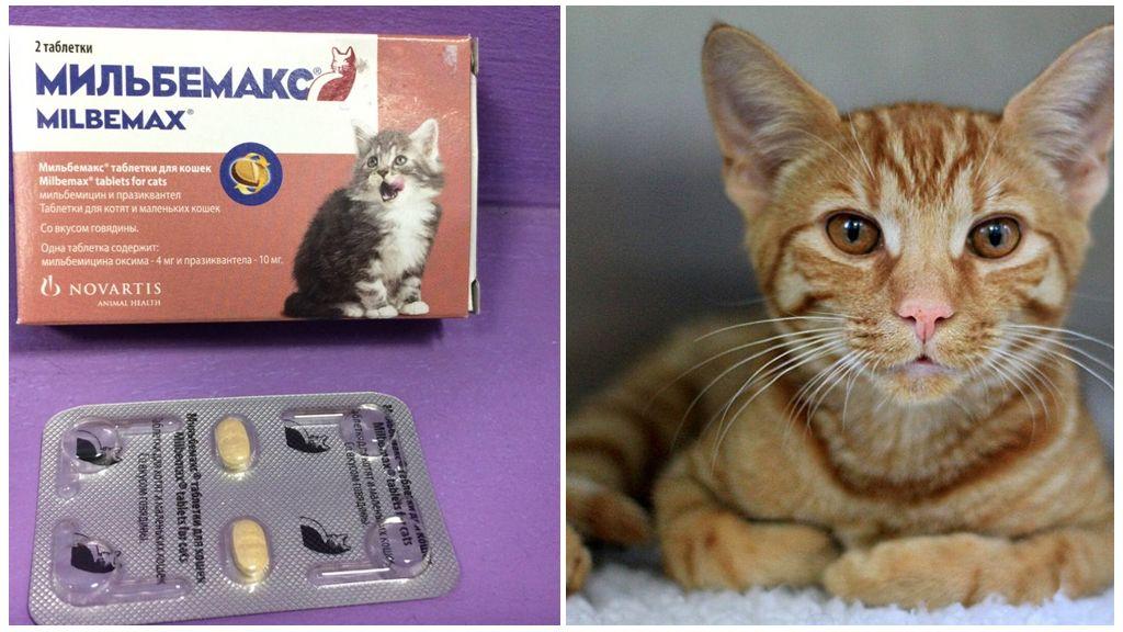 Мильбемакс от глистов для кошек