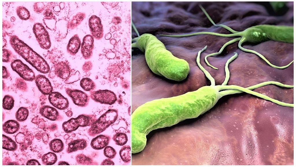 Облигатные и факультативные паразиты