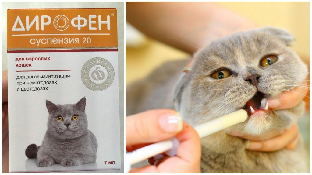 Дирофен суспензия 20 для кошек и котят