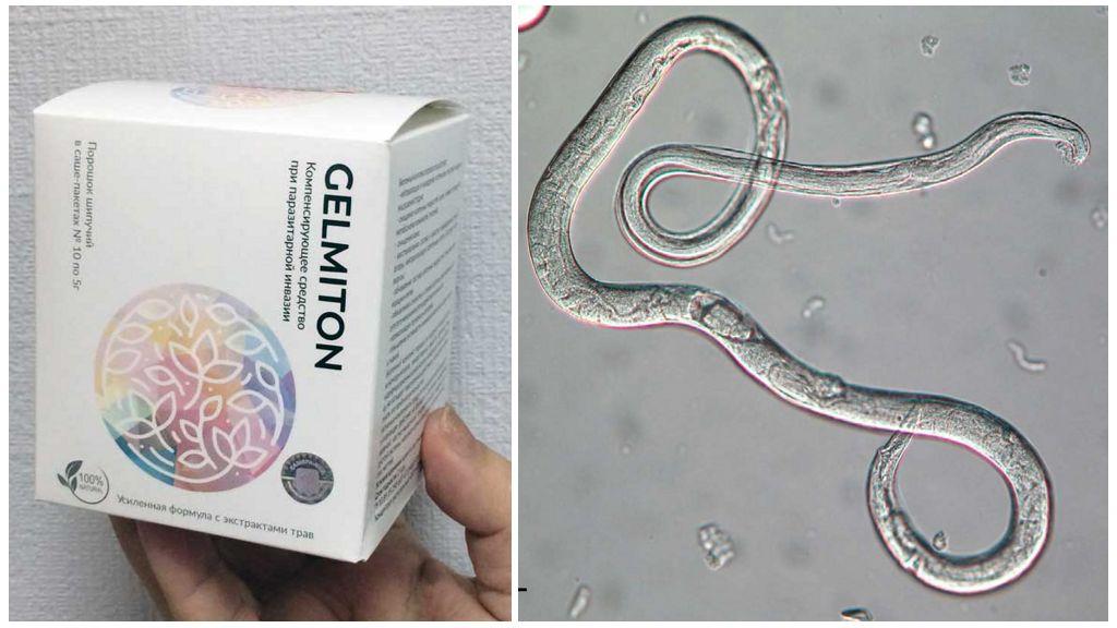 Gelmiton от паразитов