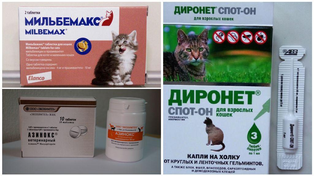 Лечение описторхоза у кошек