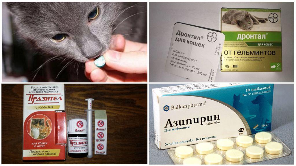 Лечение аскаридоза у кошек