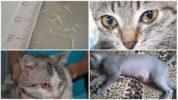 Признаки аскаридоза у кошек