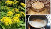 Народные рецепты от токсокароза