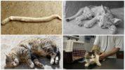 Симптомы цестодозов у кошки