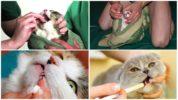 Лечение кота от глистов