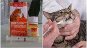 Суспензия Дирофен от глистов для кошек