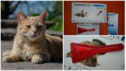 Капли на холку Гельминтал-К от глистов для кошек