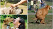 Пути заражения глистами от собак