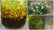 Растения от глистов