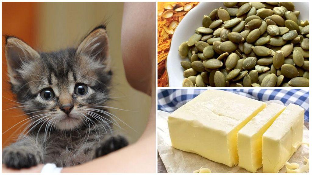 Семена тыквы для котят