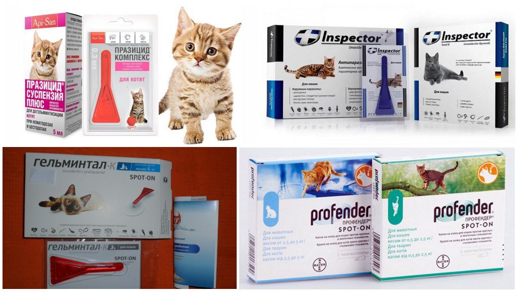 Препараты от глистов для кошек