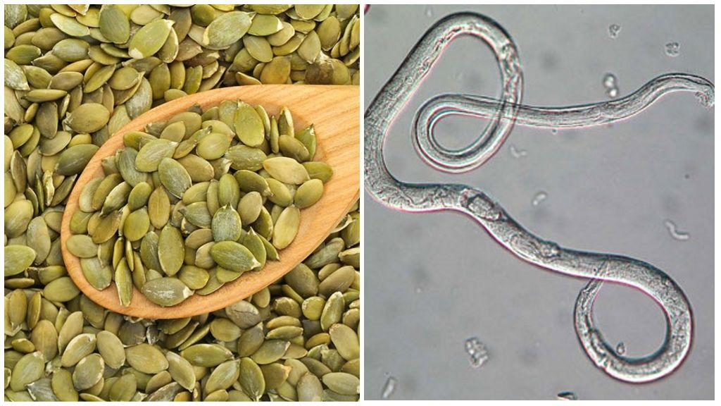 Сколько и как принимать тыквенные семечки от глистов