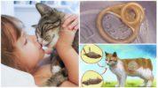 Глисты у кошки и человек