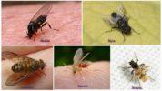 Насекомые-паразиты