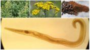 Растения от паразитов