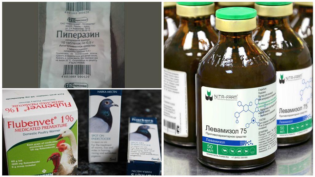 Препараты для лечения кур от глистов