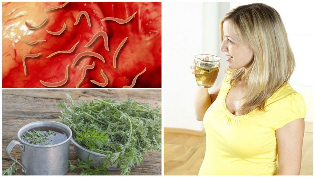 Горькая полынь от паразитов – рецепты, как принимать, отзывы