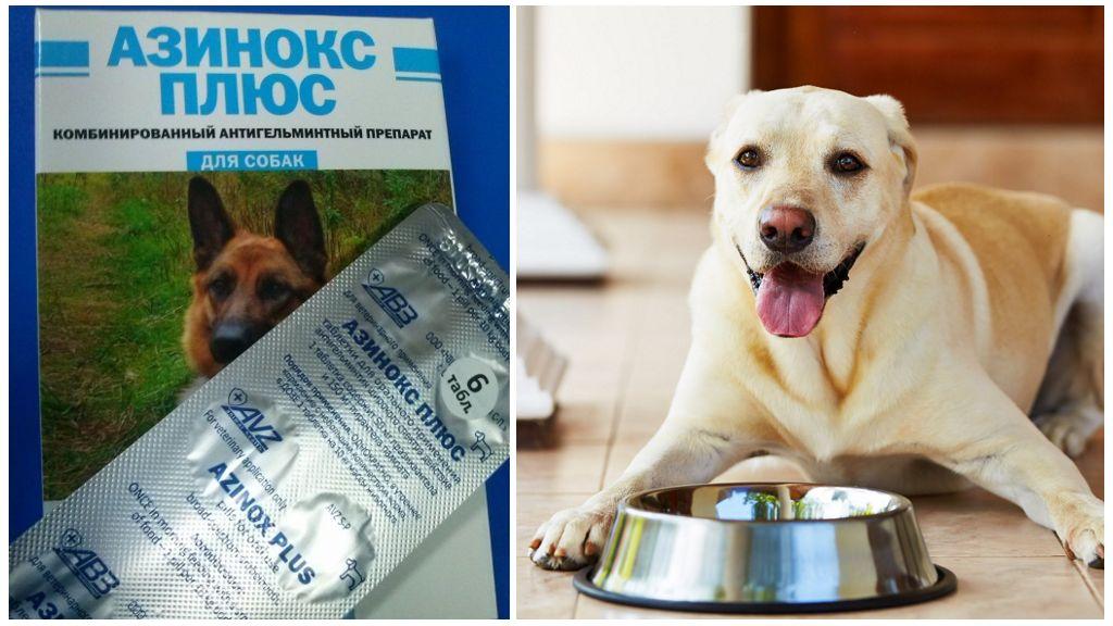 Азинокс плюс для собак от глистов