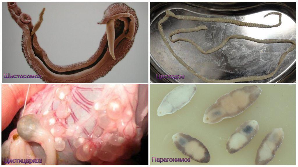 Бильтрицид от паразитов