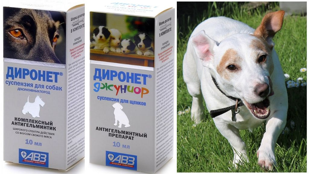 Суспензия Диронет для собак