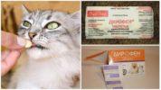 Таблетки Дирофен от глистов