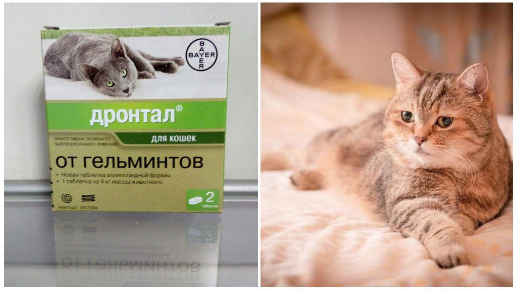 Инструкция по применению Дронтала для кошек и котят
