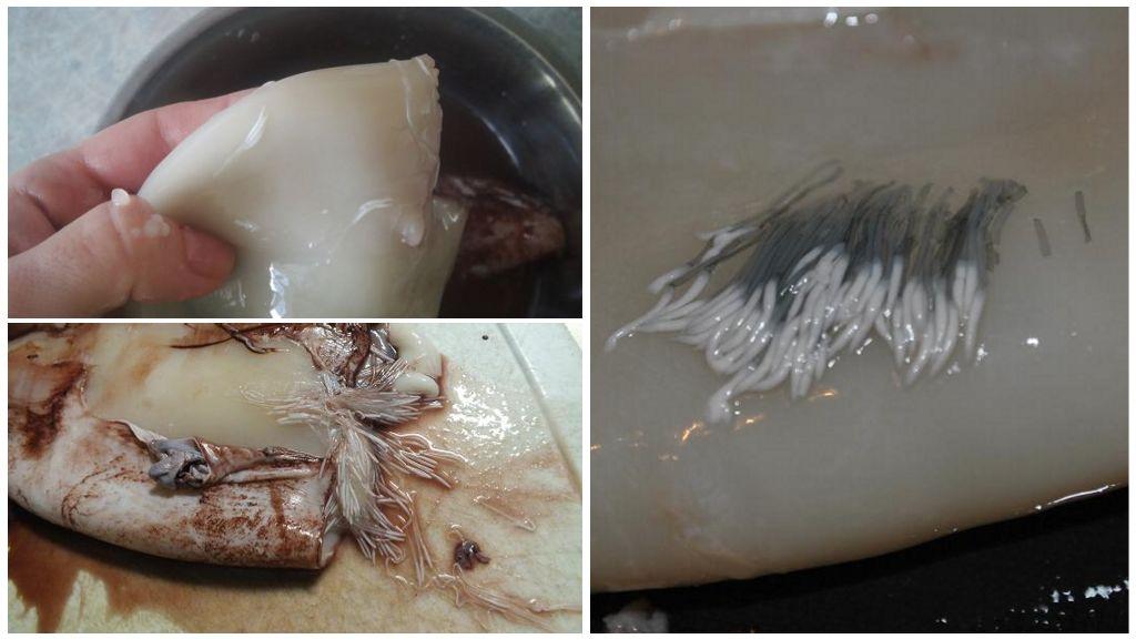 Есть ли у кальмаров глисты