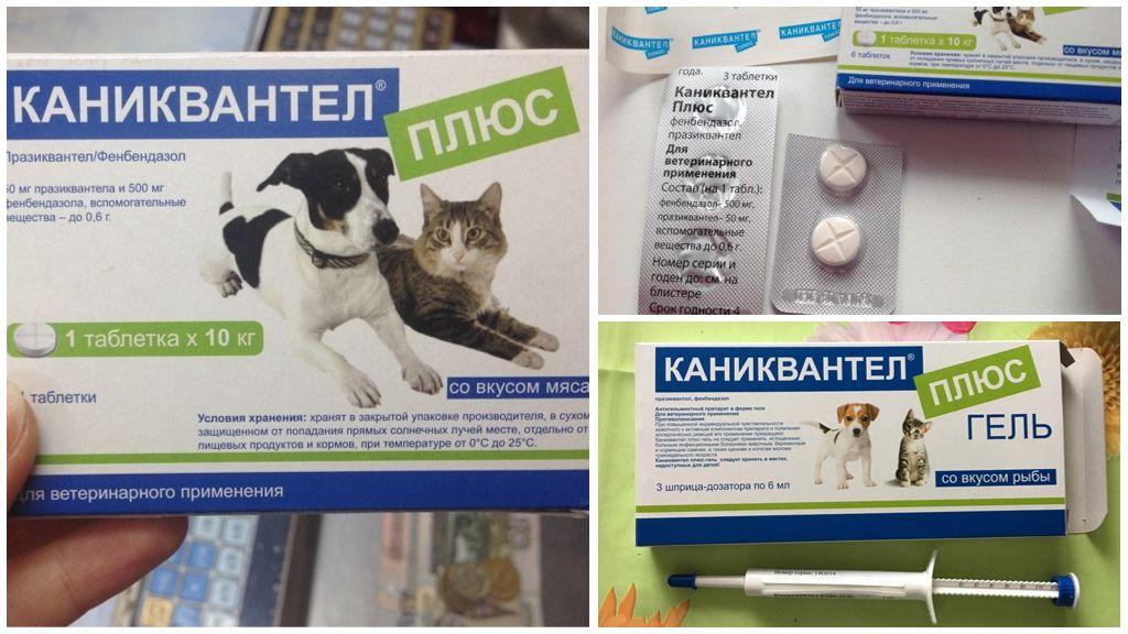 Инструкция по применению Каниквантел Плюс для собак и кошек