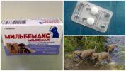 Мильбемакс для собак от глистов