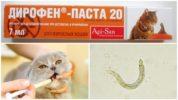 Паста Дирофен для кошек и котят