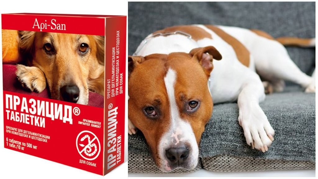 Празицид для собак
