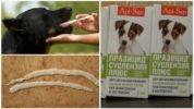 Суспензия Празицид плюс для собак от глистов