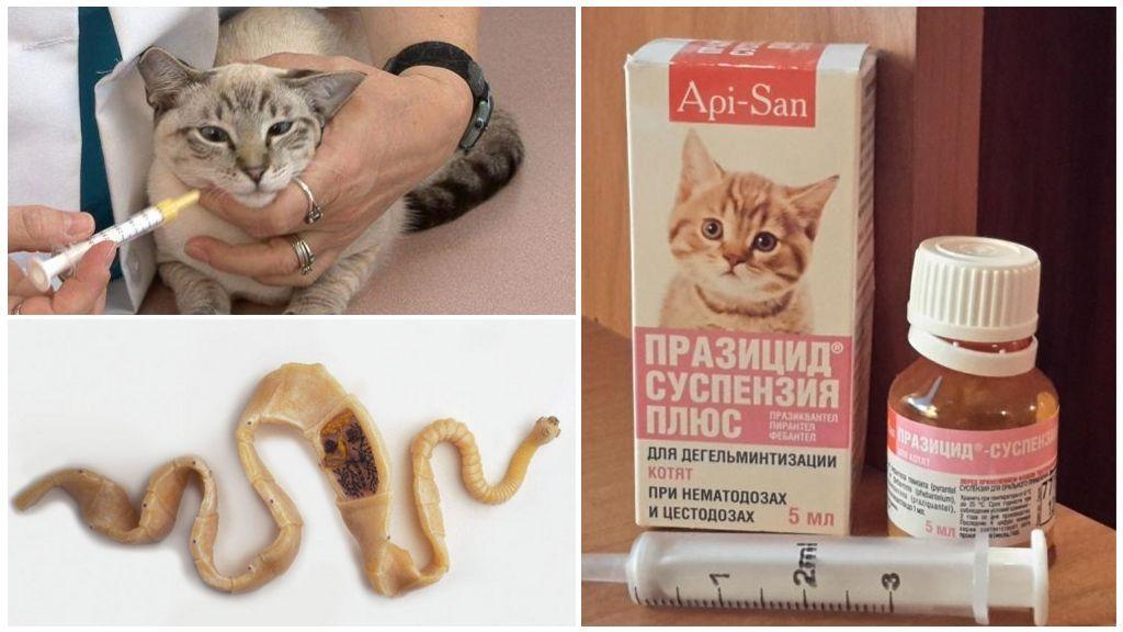 Празицид Суспензия плюс для кошек и котят