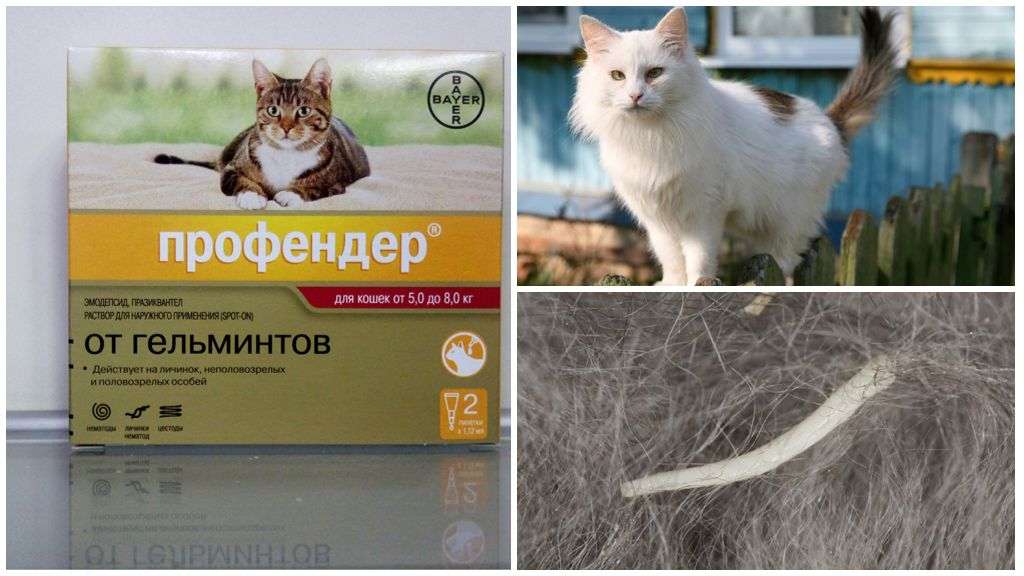 Профендер для кошек от глистов