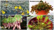 Растения хищники
