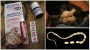 Суспензия Празител для кошек и котят
