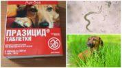 Таблетки Празицид для собак