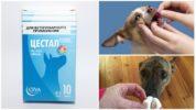 Применение Цестала для собак