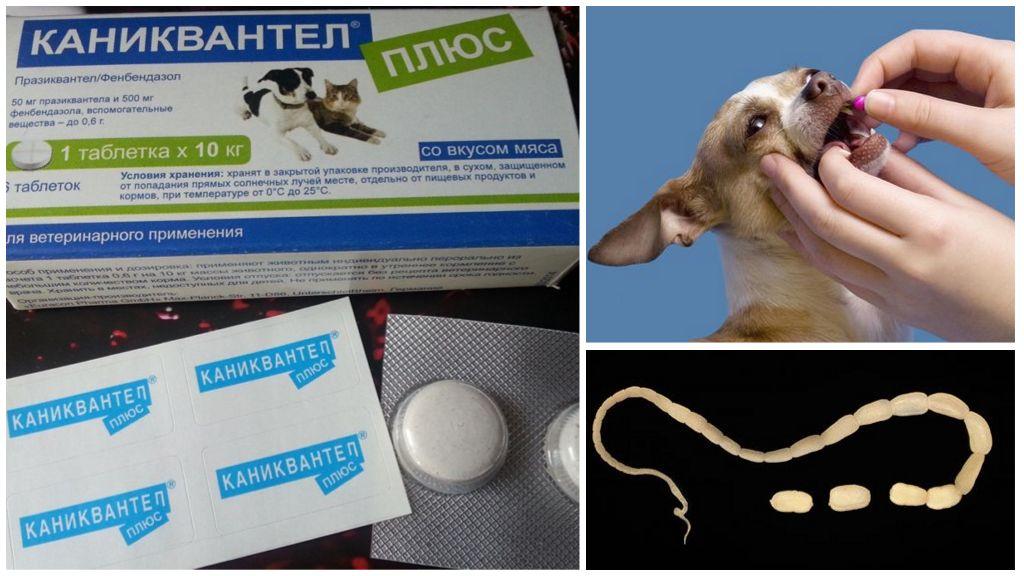 Каниквантел Плюс XL для собак