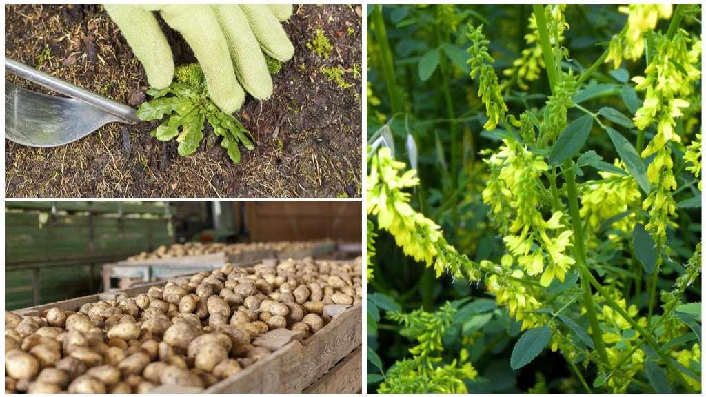 Профилактика картофельной нематоды