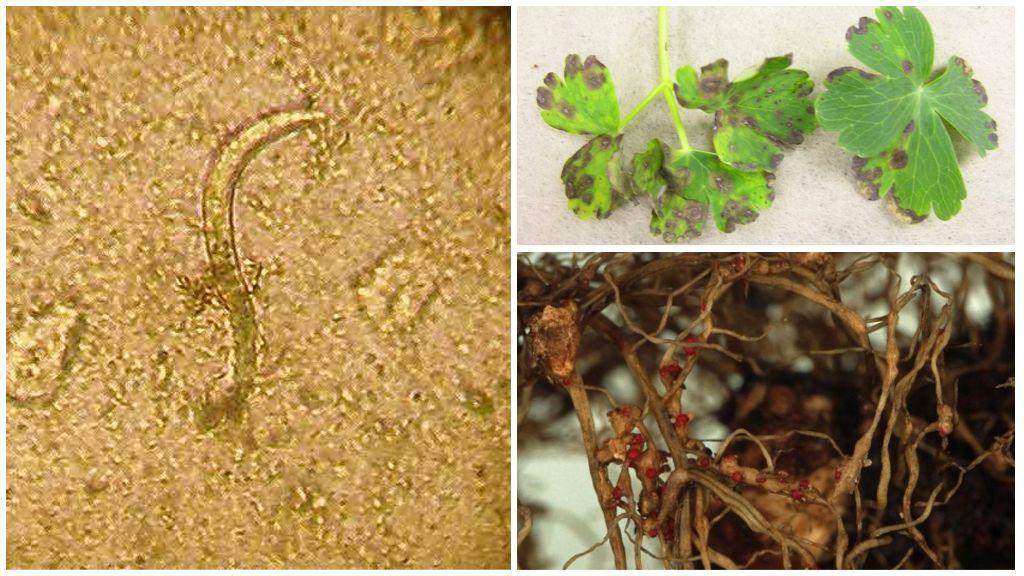 Нематоды растений