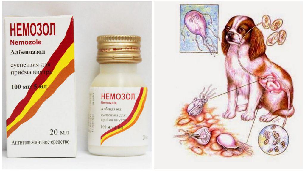 Немозол для собак при лямблиозе